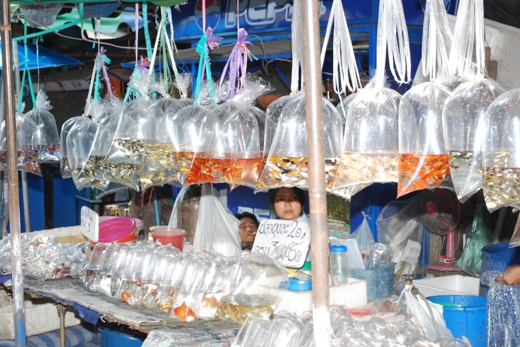 Nackte Vom Fischmarkt