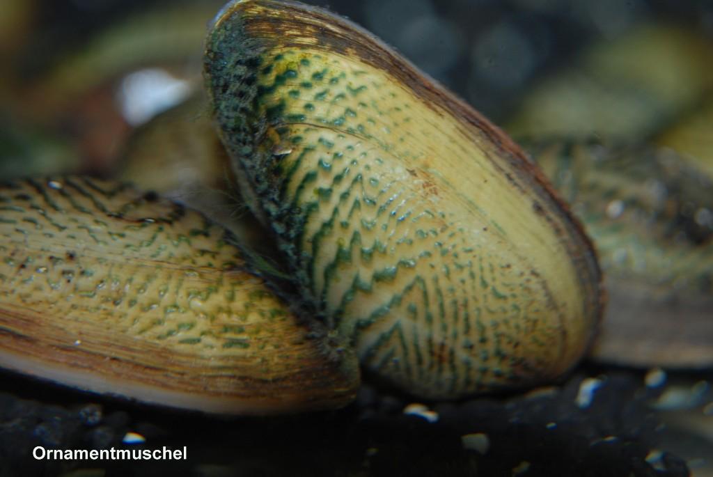 Aquarium Glaser, июнь Image710